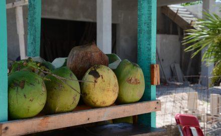 importation et entreprenariat au Sénégal